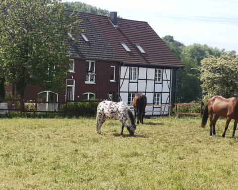 Zebra Wülfraht DÜssel